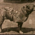 Stubby was found by John Robert Conroy in 1917.  When Conroy's unit shipped out to France, Stubby was smuggled onto...