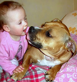 Pit Bulls and Children | Defend Pit Bulls