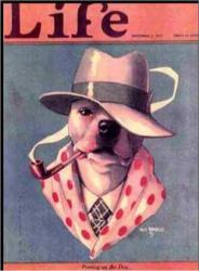 Pit Bull Magazine