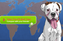 pit bull test image